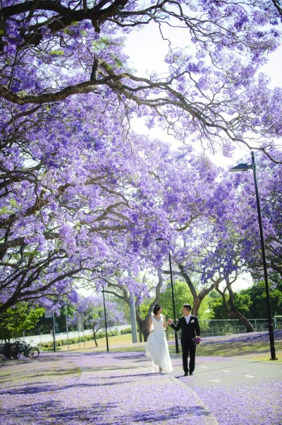 Jessica + Sida in beautiful Jacaranda season